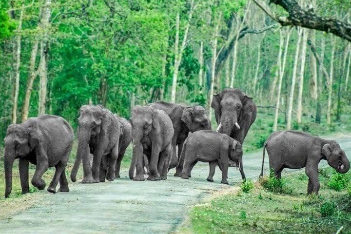 Animal Safari