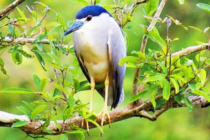 Gudavi Bird Sanctuary, Karnataka