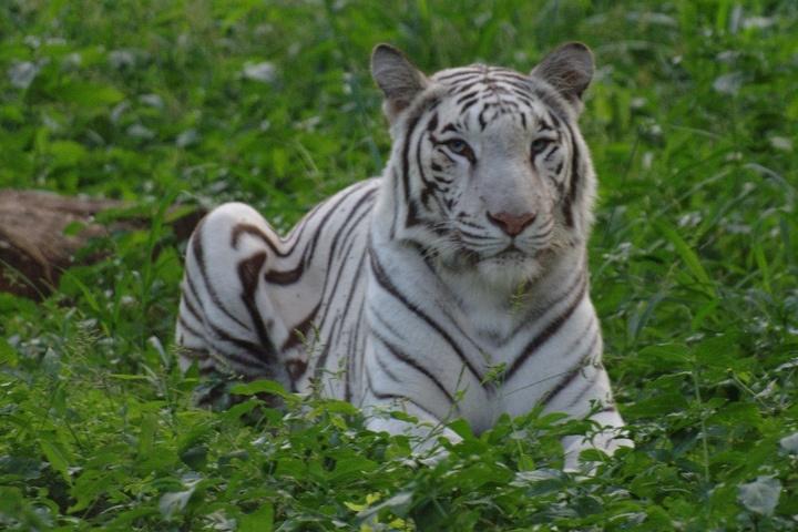 Bir Talab Zoo Bathinda