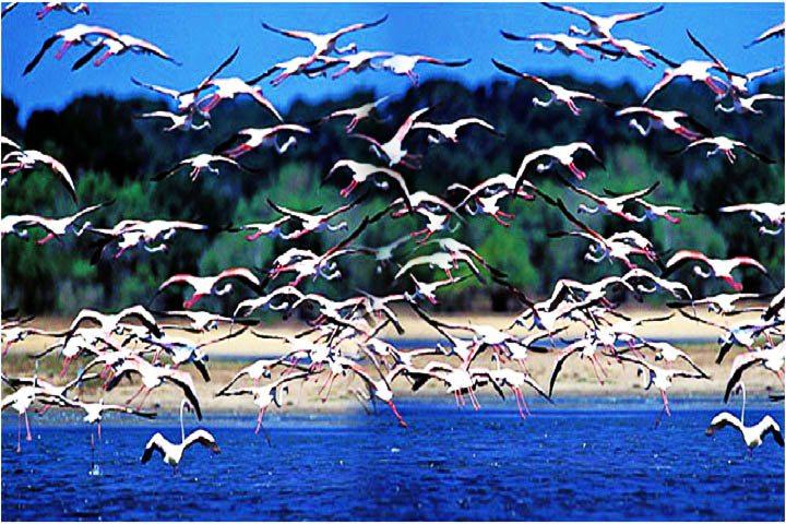 Porbandar Bird Santuary