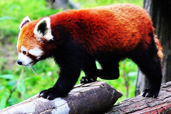 Himalayan Zoological Park