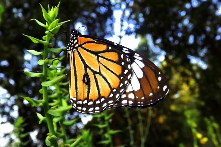 Elvis Butterfly Garden