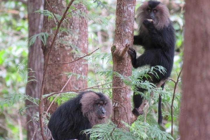 Meghamalai Wildlife Sanctuary
