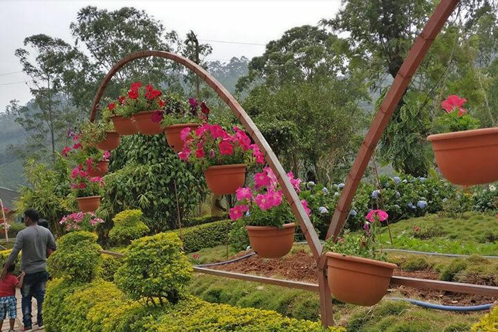 Rose Garden Munnar